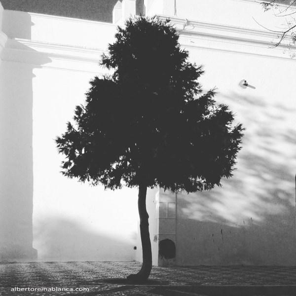 Villafranca de los Barros (Badajoz) 2015-12-02