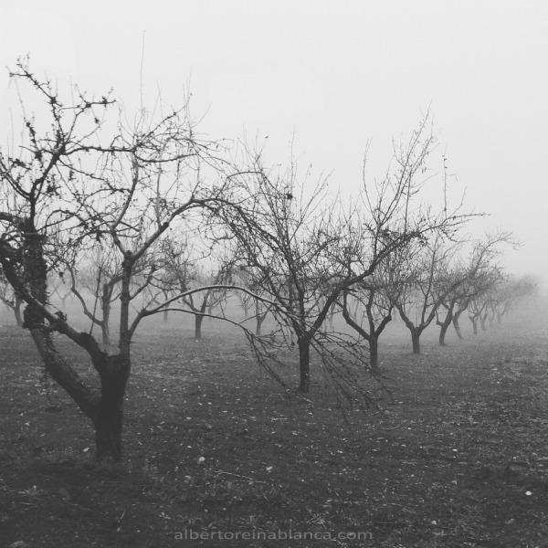 Almendros. Villafranca de los Barros (Badajoz) 2016-01-27