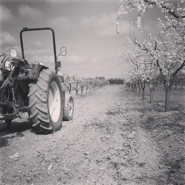 Frutales en primavera temprana. villafranca de los barros (badajoz) 2016-03-16