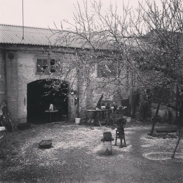 petalada primaveral. Villafranca de los barros (badajoz) 2016-03-29