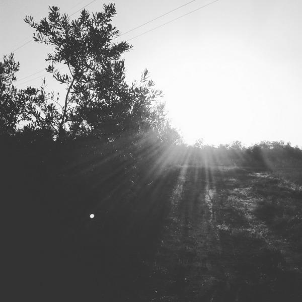 orto. Villafranca de los Barros (badajoz) 2016-07-08