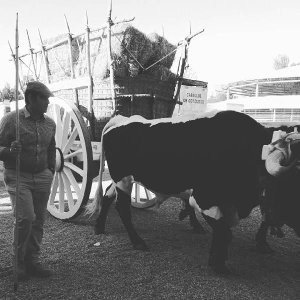 Feria de Zafra (badajoz) 2016-09-29