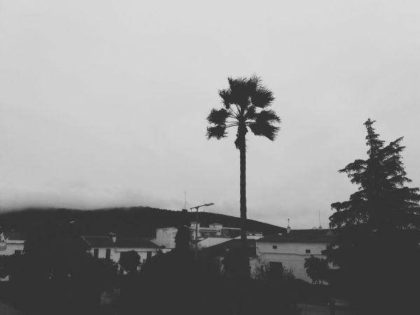 llerena (badajoz) 3 2018-11-22